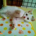 x-cat-01668-pino-00.jpg