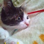 x-cat-01669-chirol-00.jpg