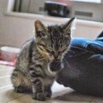 x-cat-01672-kibi-00.jpg