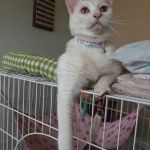 x-cat-01693-milk-00.jpg