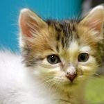 x-cat-01700-pi-00.jpg