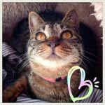 x-cat-01709-chura-00.jpg