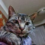 x-cat-01728-nao-00.jpg