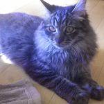 x-cat-01747-jazz-00.jpg