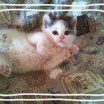 x-cat-01759-gem-00.jpg