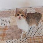 x-cat-01763-ema-00.jpg