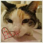 x-cat-01782-nagi-00.jpg