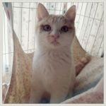 x-cat-01798-kihachi-00.jpg