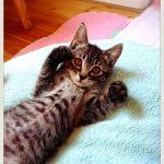 x-cat-01810-charm-00.jpg
