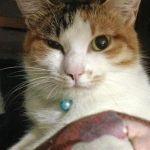 x-cat-01837-asayu-00.jpg