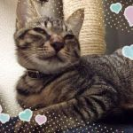 x-cat-01852-hongo-00.jpg