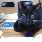x-cat-01882-jiji-00.jpg