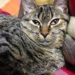 x-cat-01883-lulu-00.jpg