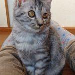 x-cat-01884-roys-00.jpg