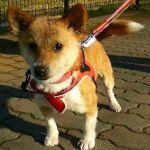x-dog-00744-nana-02