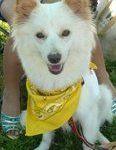 x-dog-00815-kyun-00.jpg
