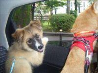 x-dog-00921-shinfo-00.jpg