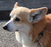 x-dog-01794-safeal-03
