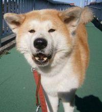 x-dog-02171-koharu-00.jpg
