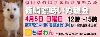 event-150405-shinozakirinji_banner_01