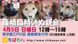 event-150405-shinozakirinji_banner_02
