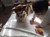 taiken_dog_sara_2