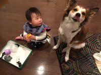 taiken_dog_sara_4
