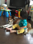 taiken_dog_sara_5