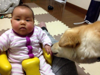 taiken_dog_sunao_1