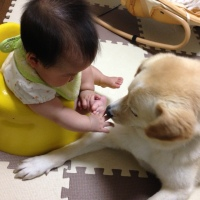 taiken_dog_sunao_2