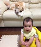 taiken_dog_sunao_3