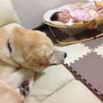 taiken_dog_sunao_4