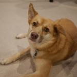 taiken_dog_biwa_2