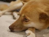 taiken_dog_biwa_3