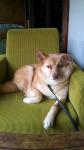 taiken_dog_biwa_5