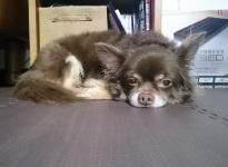 taiken_dog_ippo_3