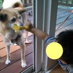 taiken_dog_suzu_3