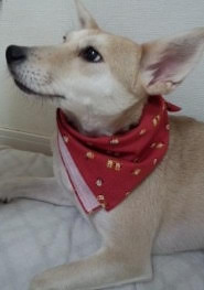 taiken_dog_umeko_3