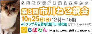 ichikawaneko03_320x120