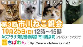 ichikawaneko03_320x180