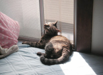 taiken_cat_kiki_1