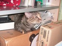 taiken_cat_kiki_2