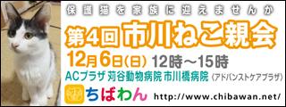 ichikawaneko04_320x120
