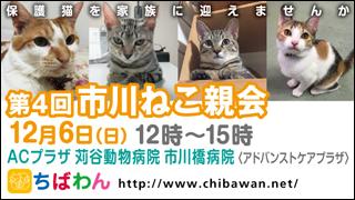 ichikawaneko04_320x180