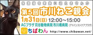 ichikawaneko05_320x120