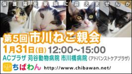 ichikawaneko05_320x180