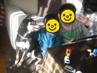 taiken_dog_konoha_04