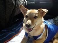 taiken_dog_liam_04.jpg