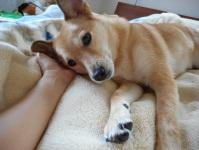 taiken_dog_liam_05.jpg
