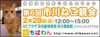 ichikawaneko06_320x120